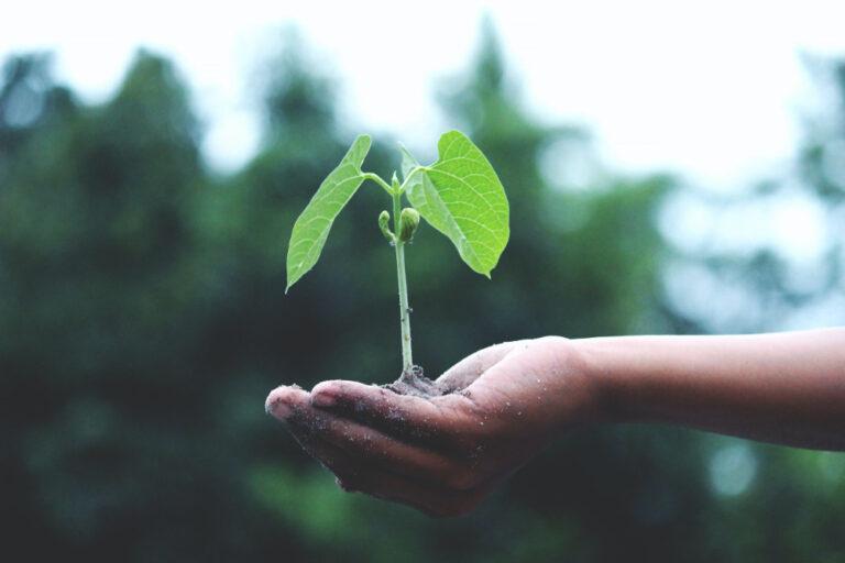 8 tips til havemanden, der sparer både tid, penge og kræfter